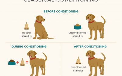Classical Conditioning and How It Relates to Pavlov's Dog