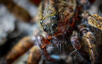 How to Cope with Arachnophobia, or Fear of Spiders